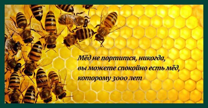 когда вратарь мёд никогда не портится сами виноваты